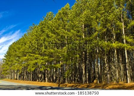 Trees on the Roadside - stock photo