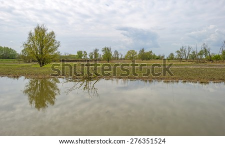 Trees on the shore of a river in spring - stock photo