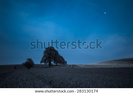 Trees on the spring fields at night - stock photo