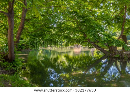 Trees over the pond in Park Sempione in Milan, Italy