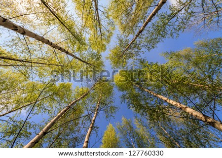 Trees reaching to the sky on a sunny summer day - stock photo