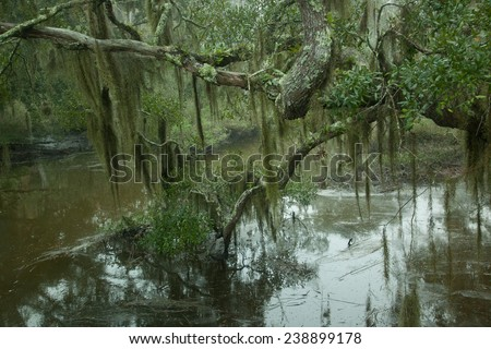 Trees reflected in dark swam water, from the Okefenokee Swamp in Southeast Georgia, USA - stock photo