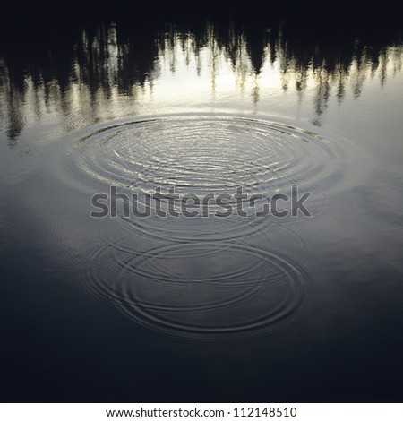 Trees reflected on rippled lake water