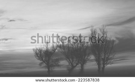 Trees silhouette - black and white - stock photo