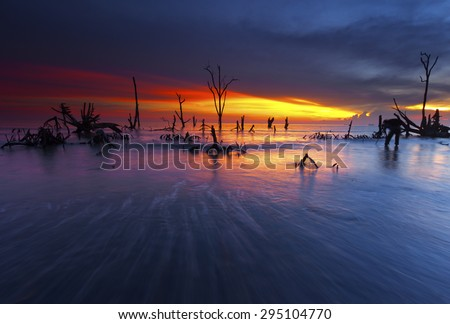 Trees silhouette during sunset - stock photo