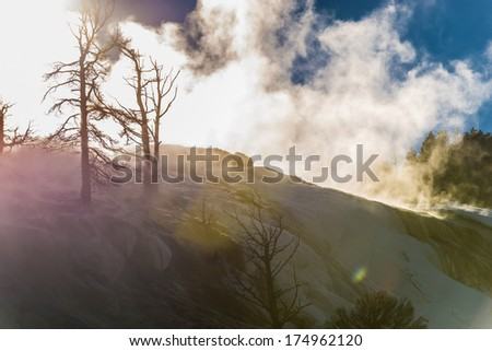 Trees Silhouettes against steamy beautiful Winter Geyser at Sunset - Yellowstone National Park  - stock photo