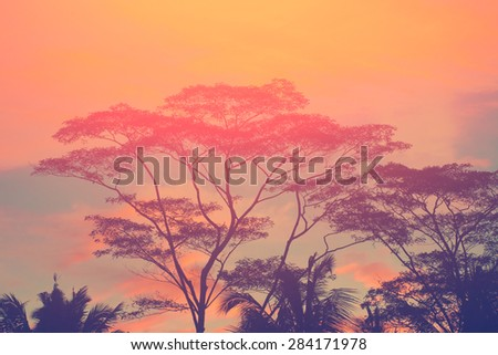 Trees silhouettes on the sunset sky - stock photo