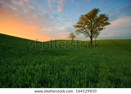 Trees Spring field during a beautiful sunset - stock photo