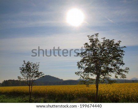 Trees, stalk of rape in the spring yellow field of blooming rapes, the sharp hill on the horizon.  - stock photo