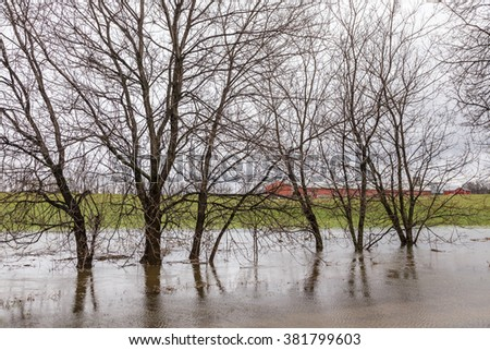 Trees standing in flooded water next to creek