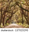 Trees tunnel -Botany Bay,South Carolina - stock photo