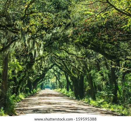 Trees tunnel -Botany Bay,South Carolina - stock photo