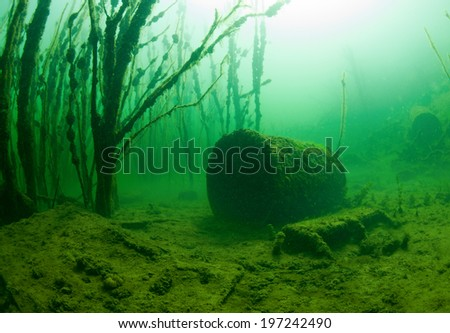 Trees under water - stock photo
