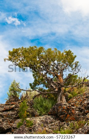 Trees, vegetation, and rocks in a arid volcanic landscape in the American Southwest
