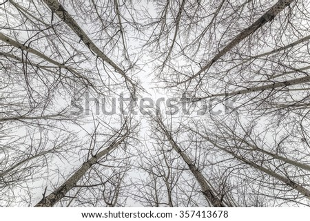 Trees - view from low angle - stock photo