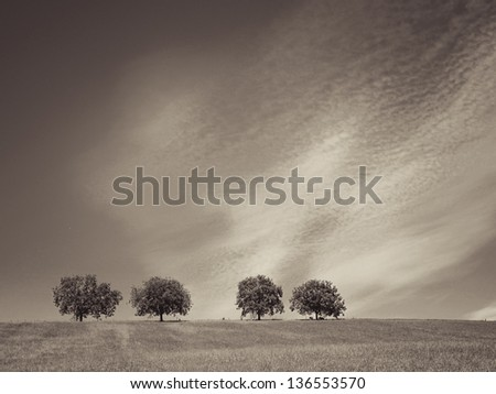 trees with blue sky and clouds 35, sepia