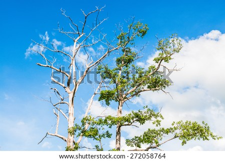 Trees with blue sky, Thailand - stock photo