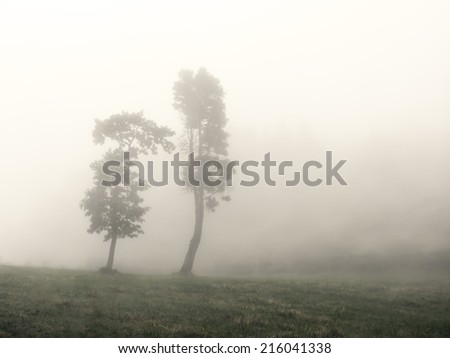 trees with fog in black and white - stock photo