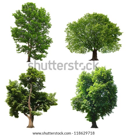 Trees with green leaves isolated on white background - stock photo