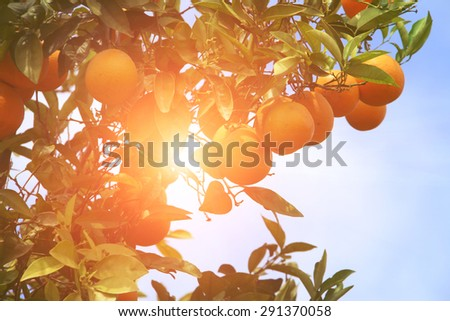 Trees with orange, with instagram style filter - stock photo