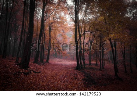 trees with red leaves in a misty forest