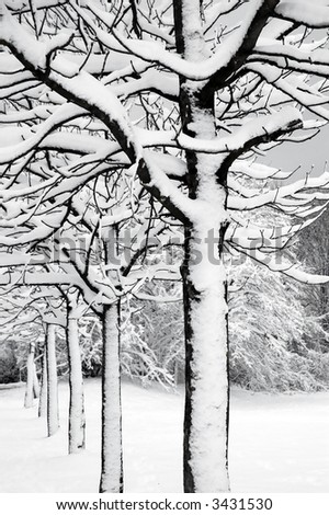 Trees with snow creating a contrasting look - stock photo