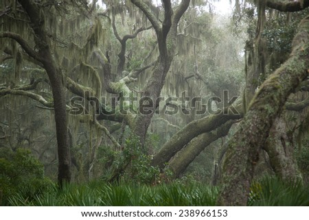 Trees with Spanish Moss and bushes on a foggy morning