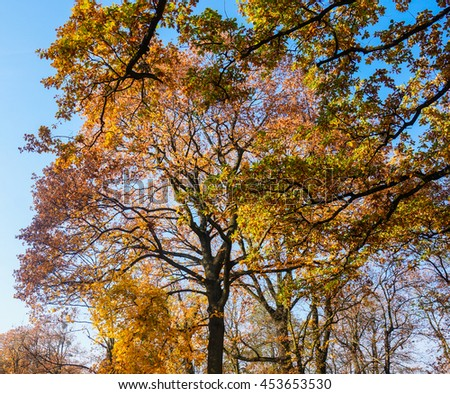 Trees with yellow leaves in the autumn