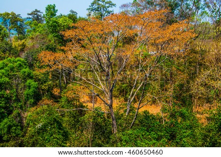 Treetop in forest, Thailand
