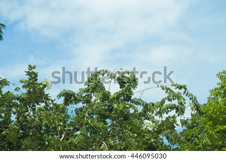 Treetops and Blue Sky