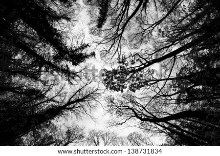Treetops in autumn painting the sky. Low angle view / Tree Tops Pattern - stock photo