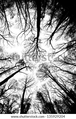 Treetops in autumn painting the sky. Seen from below / Fall's Treetops - stock photo