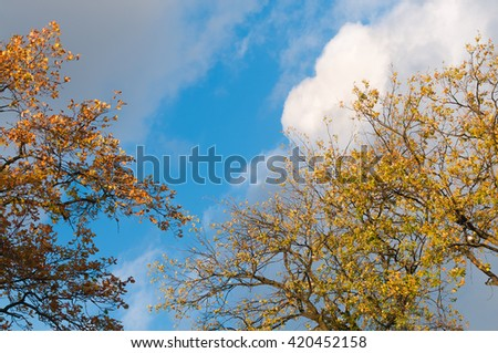 Treetops with autumnal colored leaves against cloudy blue sky, view from bottom to top; Autumn weather; Fall foliage - stock photo