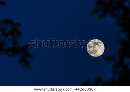 treetops with the full moon in the sky