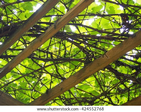 Trellis Canopy - stock photo