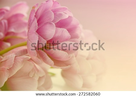 Trendy Toned Blurred Flower Background. Space for Text. - stock photo