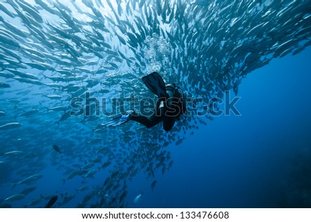 Trevally and diver at Panglao - Philippines - stock photo