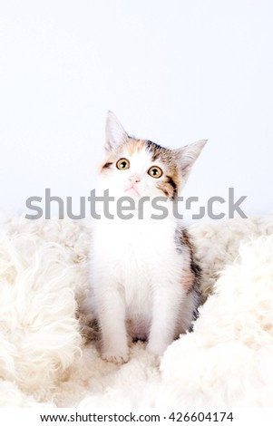 tri-colored spotted kitten sitting on a fur rug for cats - stock photo