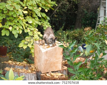 Trianguler Cut Tree trunk with Cat in the garden, Sacramento, California USA