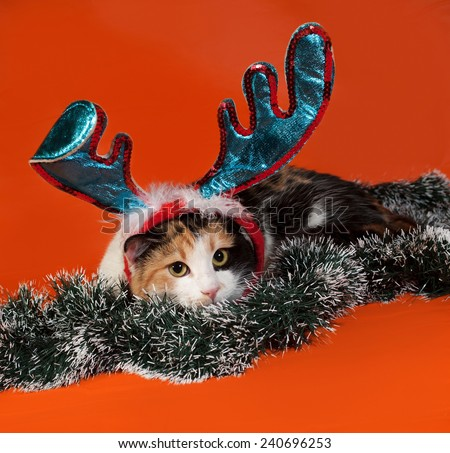 Tricolor cat lies in Christmas tinsel on orange background