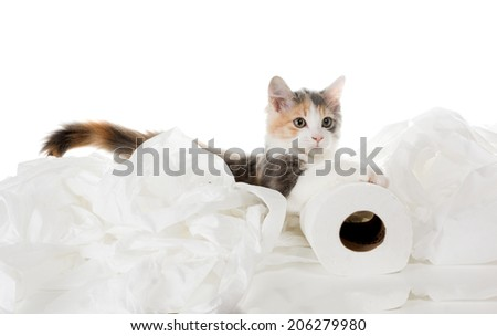 Tricolor kitten and unwound toilet paper - stock photo