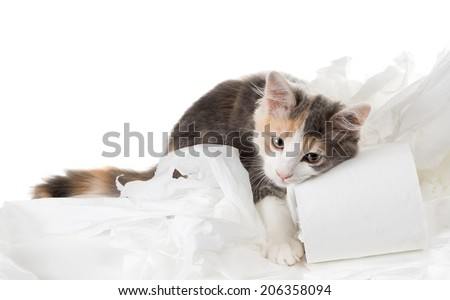 Tricolor kitten put a muzzle on a roll of toilet paper - stock photo