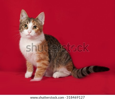 Tricolor kitten sitting on red background