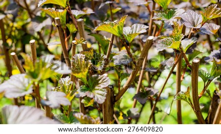 Trimmed bushes - stock photo