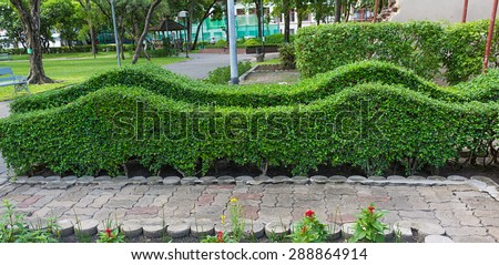 trimming shrub wave shape in park. - stock photo