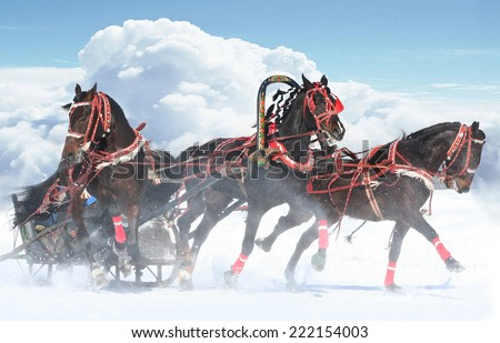 "Troika The horses, beautiful Famous Russian horse trio ""troika"""