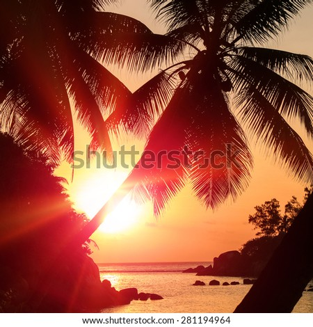 Tropic coconut palms silhouette and exotic outdoors sunset on Seychelles islands location. Sun flare on sea horizon � paradise travel vacation - stock photo