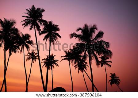 Tropic vew of beautiful coral sunset