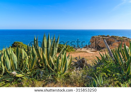 Tropical agave plants on coast of Portugal in Carvoeiro town, Algarve region - stock photo