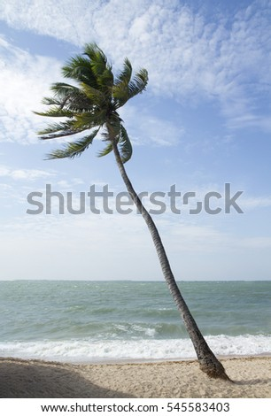 Tropical and coconut tree